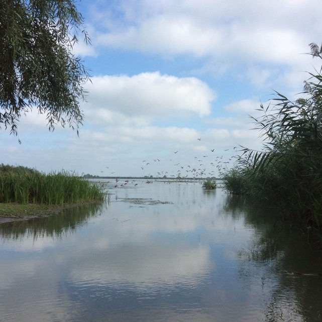 Delta Dunaju, okolice wyspy Uzlina, Rumunia•foto: D. Jaworska