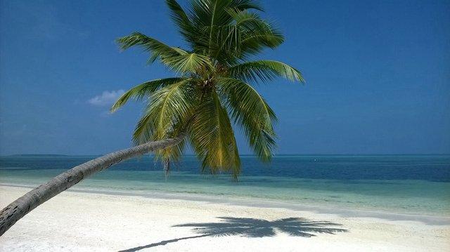 Malediwy to błękitne niebo, turkusowa woda i soczysta zieleń palm. A i zapomniałabym - biały, drobniutki piasek. Raj!•Foto: D. Jaworska