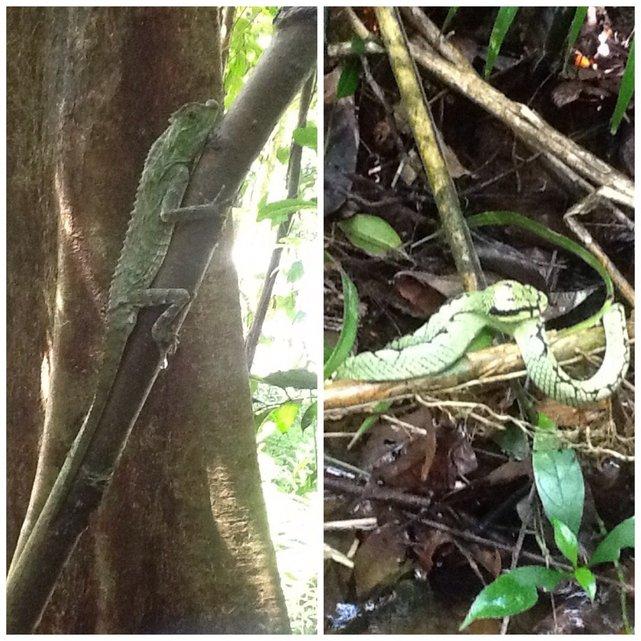 Singharaja Rainforest, Sri Lanka•Foto: D. Jaworska