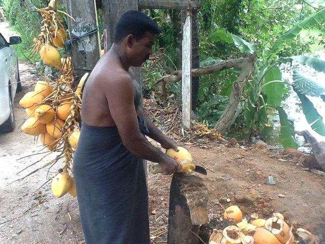 Przydrożny sprzedawca kokosów. Sri Lanka•foto: D. Jaworska