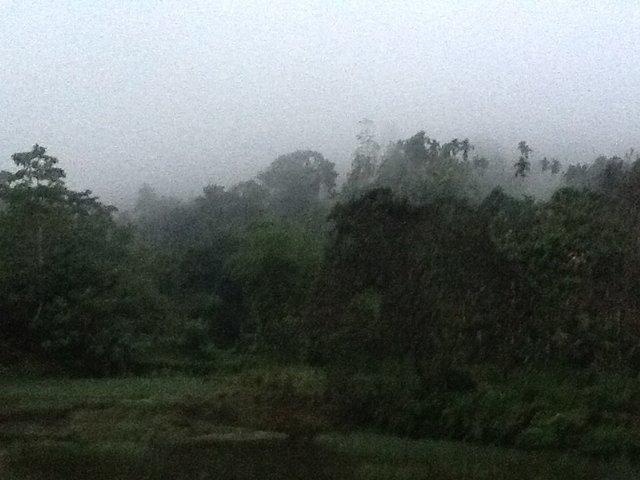 Dżungla. Sri Lnka. Foto: D. Jaworska