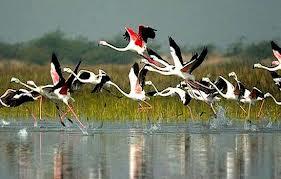 Park Narodowy Bharatpur. Indie.